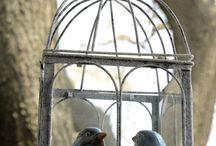 A little bird once said..... / A romantic wedding setting on a treasured bird sanctuary......