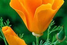 Favourite Plants & Flowers