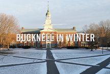 Bucknell Beauty