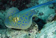 Seen while scuba diving in... / Keeping a visual directory of beautiful creatures I've spotted underwater.