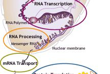 DNA etc.