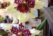 Nuestras orquideas