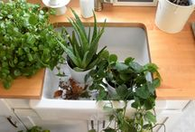 Secret Garden in your kitchen / Do you want to make your kitchen more nature-friendly? Get inspired by our ideas!