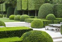 Ideas for garden