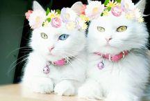 猫(*´∇`)