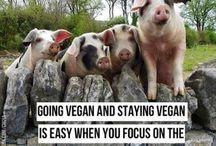 V | Vegan