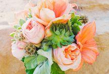orange/peach flowers / by Danelle Ariaz