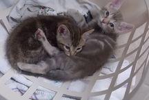 So Precious / Cats, dogs, animals, babies