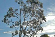 Taille d'arbre / Taille de formation; taille sanitaire; taille d'adaptation; taille de réduction sur des arbres en Ardèche.