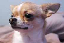 Dog Breeds Info
