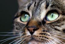 Interesting Cat Tidbits