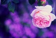 • Beautiful photos
