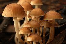 Cogu / Cogumelos