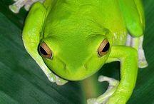 Amphibien, Reptilien und Weichtiere