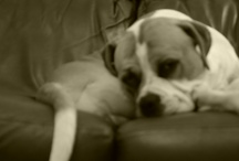 man, dog is my best friend / by Jordan Copage