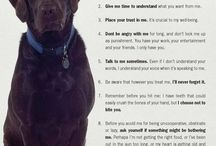Dog stuff / by Becky Zelada