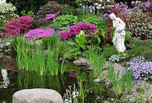 Gartengestaltung / Rund um das Thema Gartengestaltung