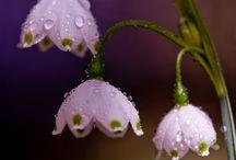 FLOWERS LEAVES TREES - KWIATY LIŚCIE DRZEWA / Wszystko co zielone, co róśnie, co żyje, kwiaty, liście, drzewa