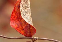 autunno magico