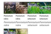 9.1 Plantas