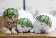 Funny Cats / Cats are a constant source of entertainment, so we've decided to collect some of the funniest cat images we can find. Check out more at http://bestforcats.co.uk
