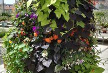 novedades de #jardinería Corma / introducir al mercado las nuevas tendencias de #jardinería #piramidesflorales #cestasflorales #sacosflorales #mixflowers #cojinesflorales