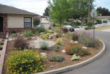 Drought Tolerant Landscape / by Beth Steiner