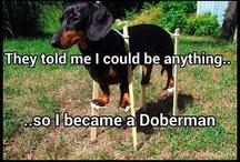 Weenie DOGS ❤ / by Suzy Harper