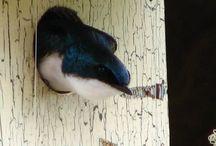 Birds / by Diana Carey