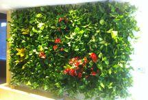 Green Walls @ Florarie / Green Walls @ Florarie