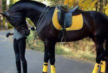 svart häst outfit