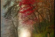 Trees / by Ingrid Els