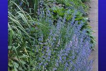 Slope garden
