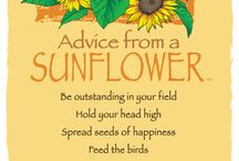 Advice From . . .