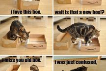 Funny Animal Pictures / It's funny, trust me ;)