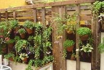 Jardins e áreas externas / Jardins, flores, decoração, inspirações, móveis, reciclagens / by Edir Busetto