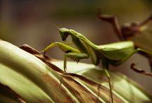 vanessa fotos / Fotos de pequenos insetos