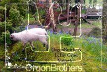 OrgonBrothers podróże