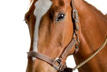 Oils For Horses