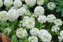 květiny, které chci :)