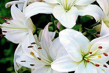 Flora / Natural beauty
