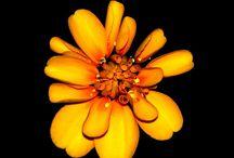 fiori per quadri