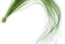 Bear Grass / Bear Grass is a particularly pliable grass seen making loops and graceful arches in floral arrangements.