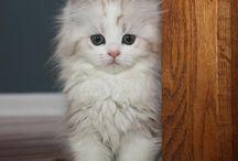 Γατάκια ασπρούλης