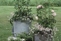 Gardens in pots