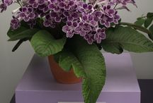 Container Plants / Plants ideally suited to container growing.