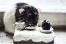 Ratties + Mice