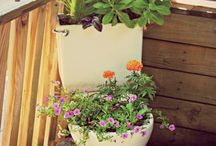 toilet garden / Just think about all those ugly old toilets piling up in landfill sites, why not reuse them? Add some beauty to your garden?