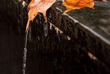 Beautyful Autumn