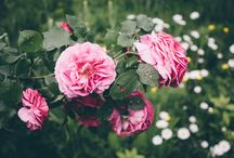 Flowers ♥ / Beautiful photography of flowers ♥♥♥